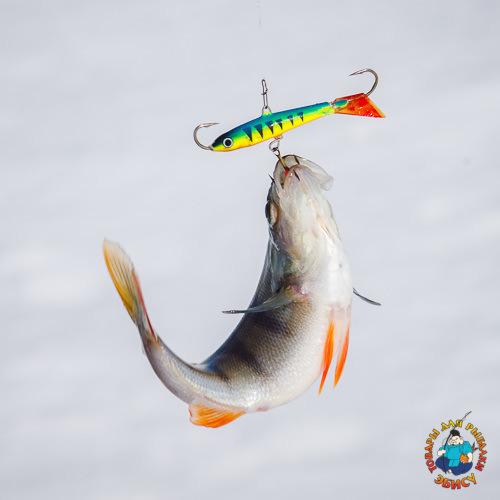 balansiry dlya zimnej rybalki