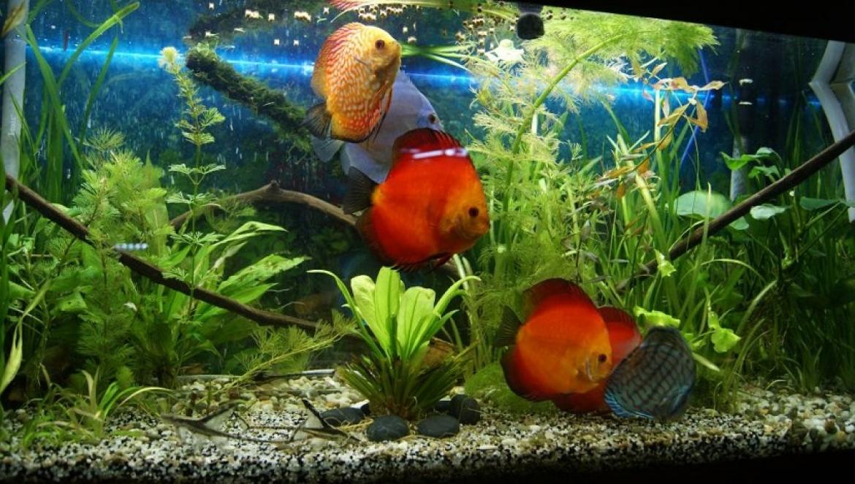 chto nuzhno znat pered tem kak kupit akvarium i zavesti rybok