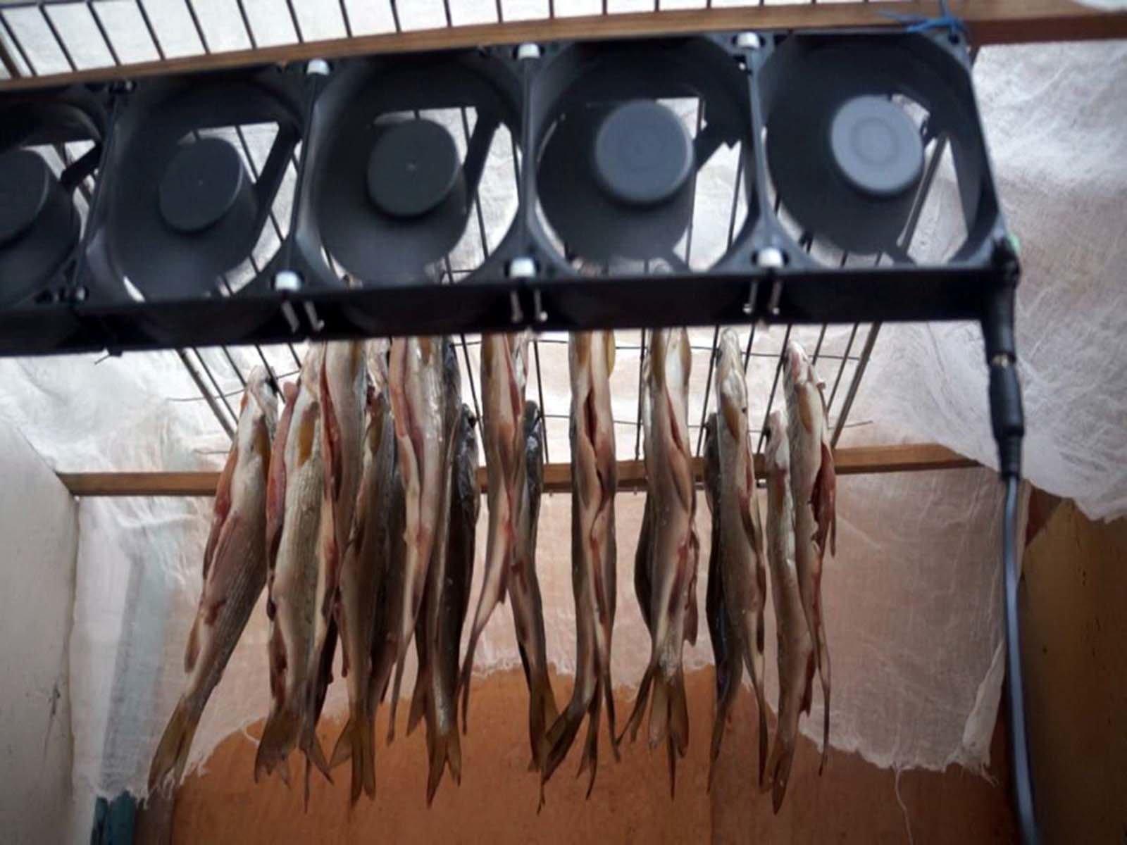 kak izgotovit sushilku dlya ryby v usloviyah kvartiry