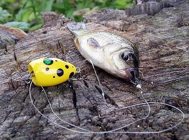 kak lovit na popla popper