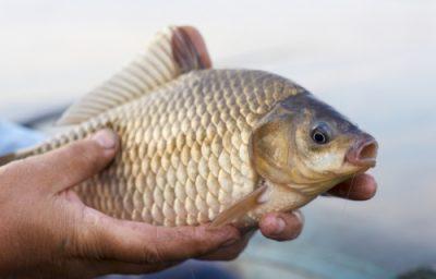 lovlya karasya gde iskat i na chto rybachit