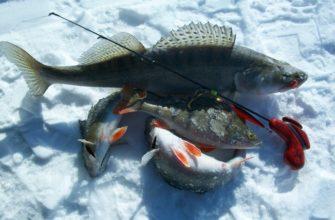lovlya okunya zimoj na zhivca na zherlicu