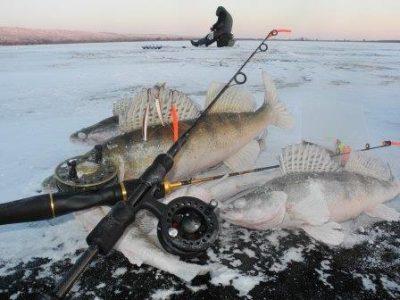 lovlya sudaka zimoj vse sredstva horoshi