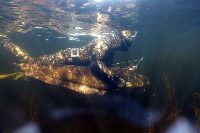 podvodnaya ohota na soma osnovnye sovety