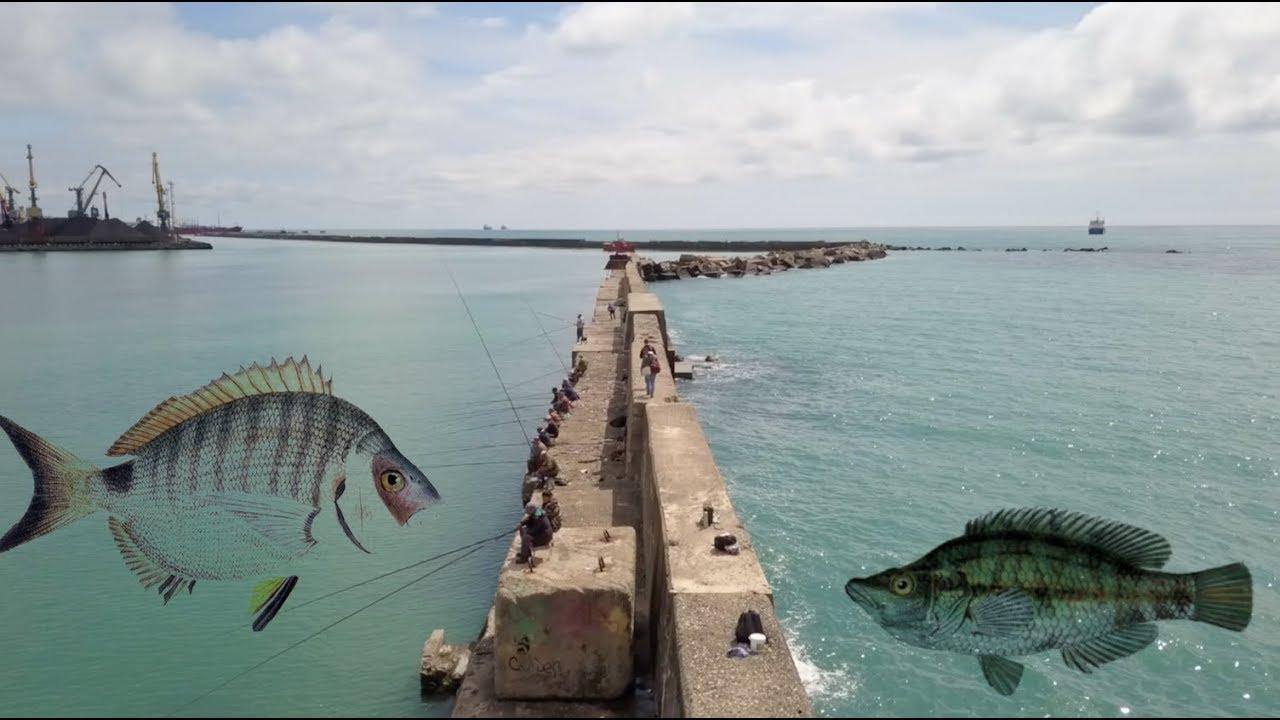 rybalka na chernom more