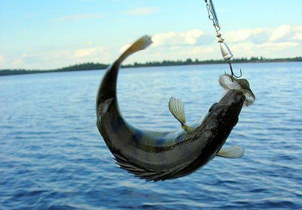 rybalka na volge