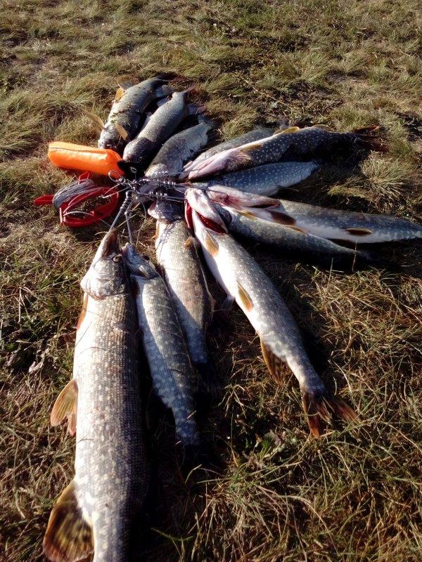 delimsya sekretami kak sohranit shhuku na rybalke