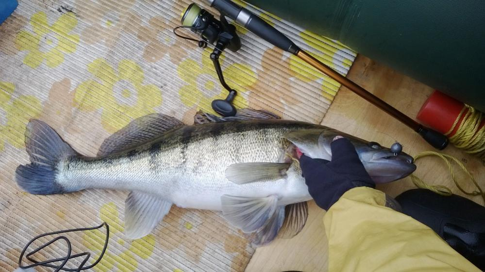 lovlya sudaka na dzhig malenkie sekrety populyarnoj rybalki