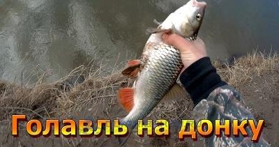 osobennosti i njuansy lovli golavlya na donku
