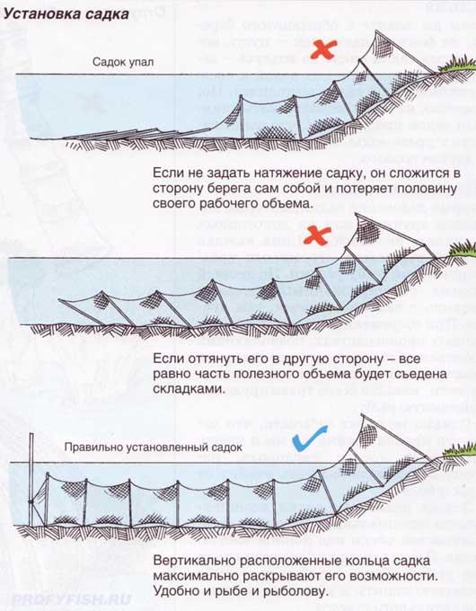 sovety po vyboru sadka dlya ryby