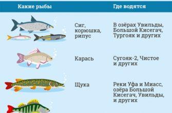 gde porybachit v chelyabinskoj oblasti